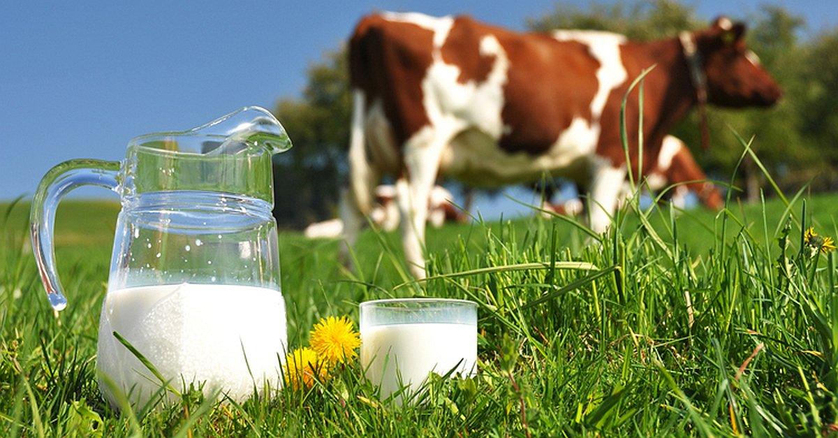 leite-de-vaca